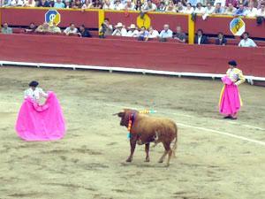 Toro41